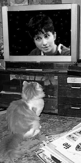 Kitten looking at a television showing the young Valerie Singleton against a starry background